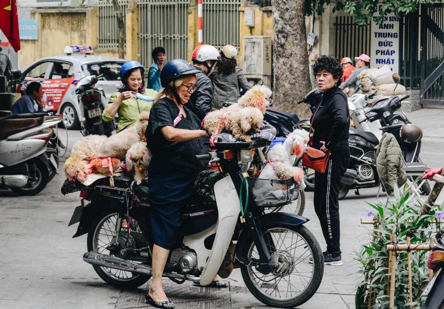 Vietnam, motorcycle, dogs
