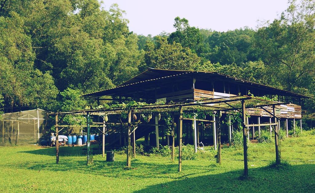 Trend Spotting: Malaysian Millennials Take on Farming
