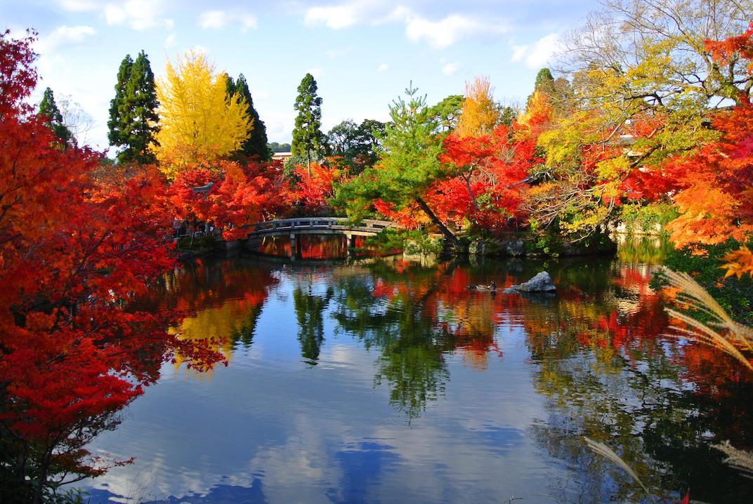 4 seasons limited edition items autumn leaves